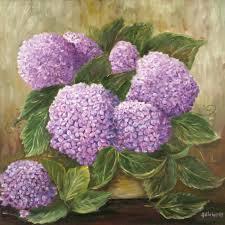 Ortanca Çiçeği Hakkında Genel Bilgiler-12