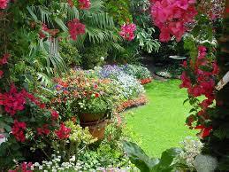 Ortanca Çiçeği Hakkında Genel Bilgiler-14