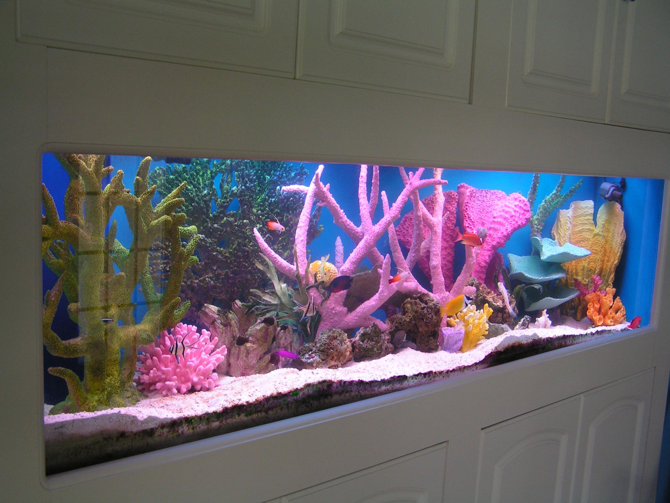 Как сделать аквариум красивым в домашних условиях