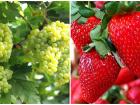 Meyveler Hangi Hastalığa İyi Gelir