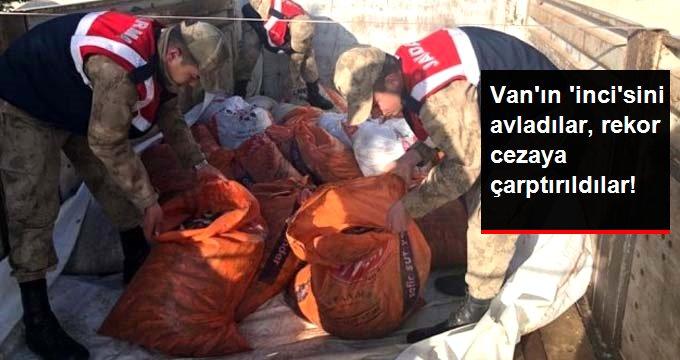 Koruma altındaki inci kefallerini avlayan 68 kişiye 172 bin TL para cezası verildi