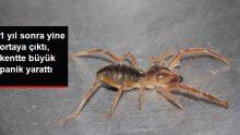 Et yiyen örümceğin 1 yıl sonra yine ortaya çıkması panik yarattı