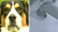 Banyodaki Sahibinin Kolunu Isırdı – Sahibi Gerçeği Farkedince Köpeğe Minnettar Kaldı