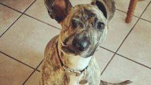 Hasta Köpeğin Uyutulması Kararlaştırıldı – Bir Gecede Hayatı Böyle Değişti