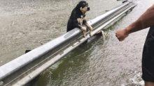 Kasırganın Ortasında Tek Başına Bırakılan Köpeğin Fotoğrafı Görenleri Hüzünlendirdi