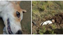Köpeği Bütün Gece Havladı – Ertesi Gün Bahçeye Çıkınca Şok Manzarayla Karşılaştı
