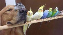Köpeğin Kimlerle Arkadaşlık Ettiğini Görünce İnanamayacaksınız