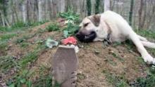 Köpek Her Gün Evden Kaçıyordu – Nedeni Anlaşılınca Herkes Duygulandı