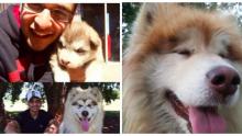 Küçük Diye Bir Yavru Köpek Sahiplendiler – Aylar Sonra Köpek Bakın Ne Hale Geldi