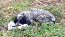 Sokak Köpeğinin Ağzında Tuttuğu Poşetin İçini Açınca Gözyaşlarına Boğuldular