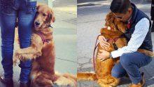 Yolda Gördüğü Yabancılara Sarılmadan Edemeyen Köpekle Tanışın