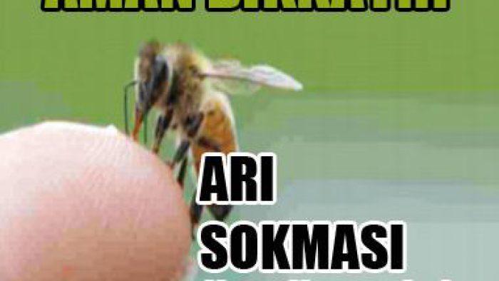 Aman Dikkat! Arı Sokması Öldürebiliyor.