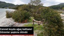 Akbük Koyu'nda Ağaç Katliamı! Manzarayı Gören Şaşkına Döndü