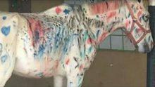 Öğrencilerinden Atı Boyamalarını İstedi – Hayvanseverler Küplere Bindi