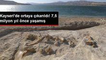 Kayseri'de 7,5 milyon yıllık zürafa fosili bulundu!