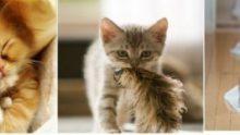 Kedi Aksesuarları