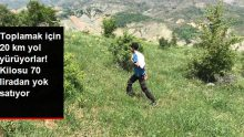 Bingöl'de toplamak için 20 kilometre yol yürünmesi gereken Kınkor mantarının kilosu 70 TL'ye satılıyor